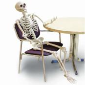 Prop, skelett ställbart 152 cm